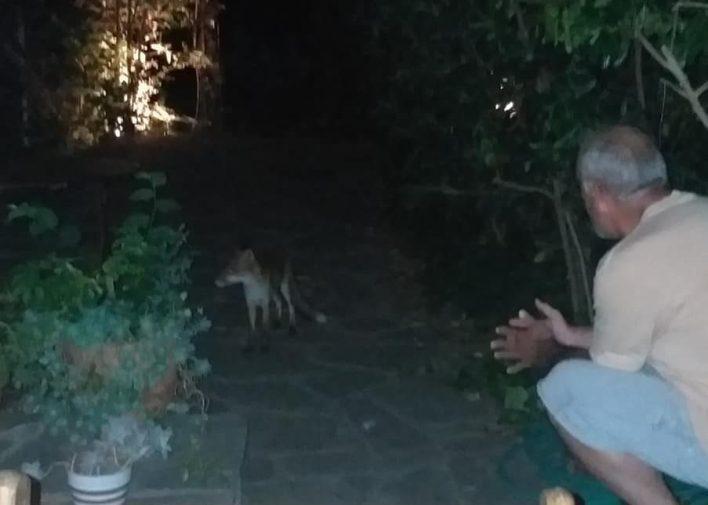 Ο Δημήτρης Μάρδας εξημέρωσε αλεπού και την έχει κατοικίδιο στο σπίτι του!
