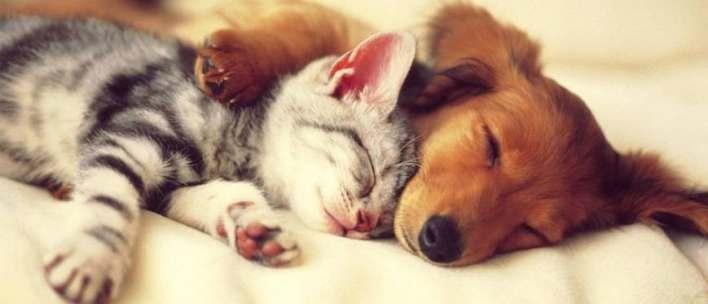 Νομοθεσία για κατοικίδια: Ποιες είναι οι υποχρεώσεις μας απέναντι στα ζώα συντροφιάς