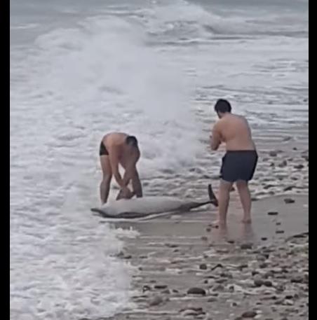 Έσωσαν δελφίνι σε παραλία του δήμου Παγγαίου (video)
