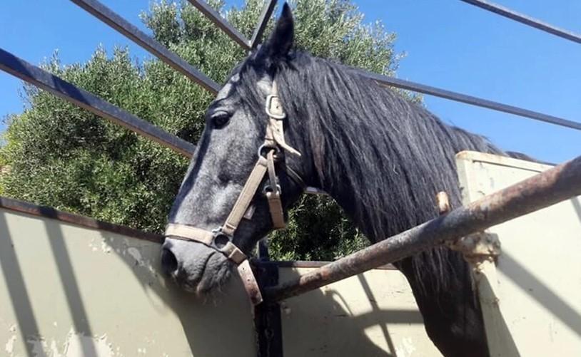 άλογο κρήτη