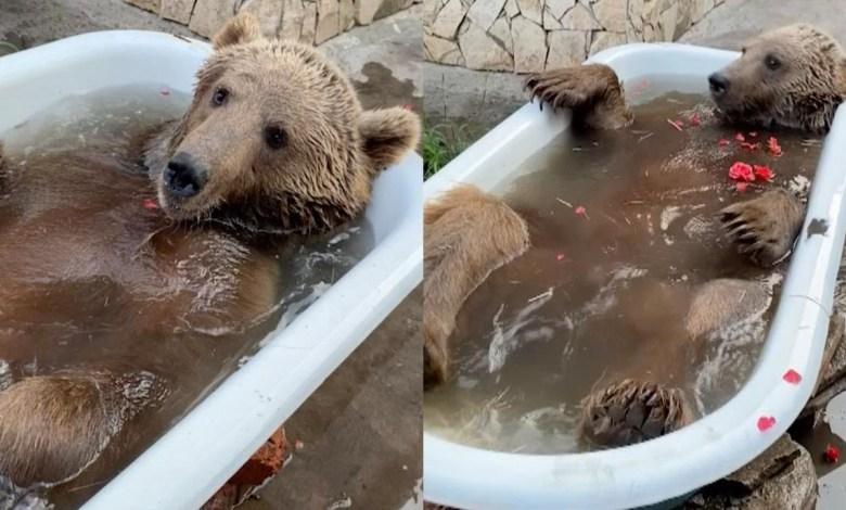 αρκούδα μπάνιο Ρωσία