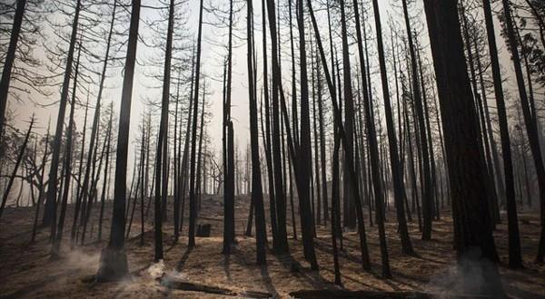 wwf δάση εκστρατεία