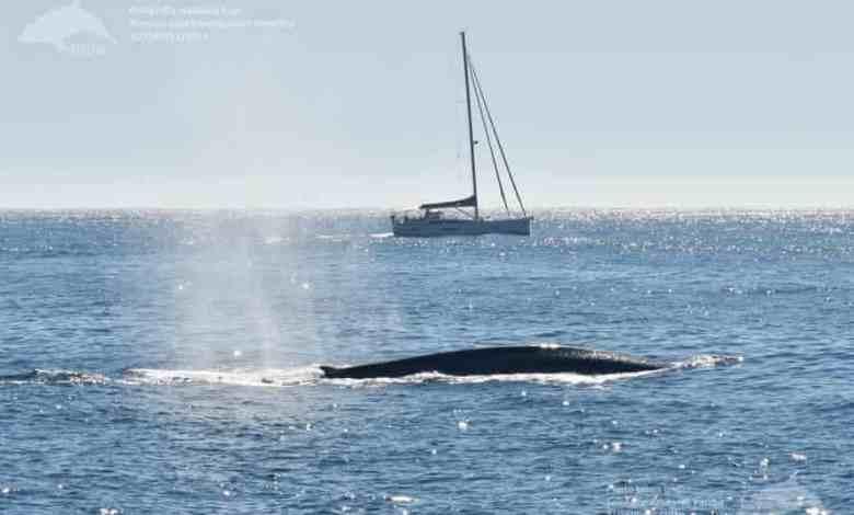 μπλε φάλαινες Ισπανία