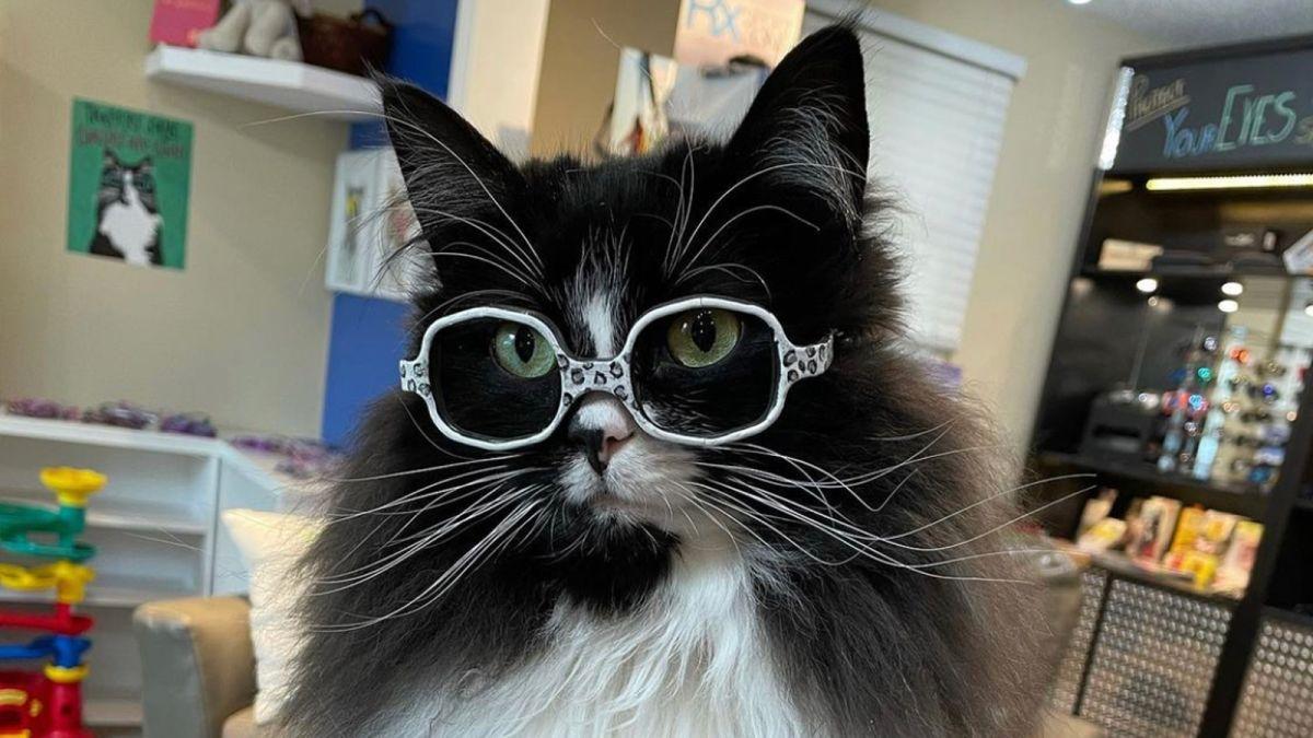 truffles γάτα γυαλιά