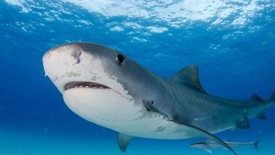 καρχαρίας επίθεση drone δύτης