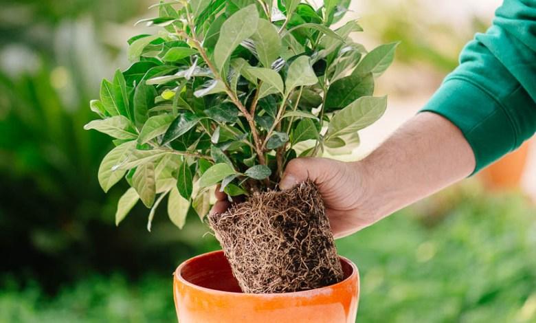 φυτά Άγιος Στέφανος Χαλάνδρι