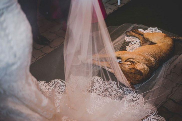 σκύλος πέπλο γάμος