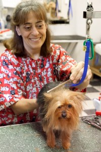 Pueblo's voters and their pets love Pet Paradise for Gold. Courtesy Photo