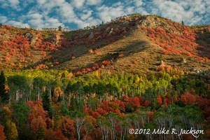 Mountain Maple Hillside