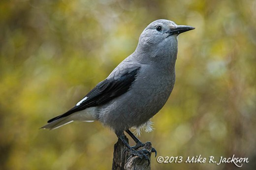 Clarks Nutcracker Oct15