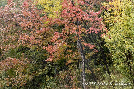 Fall Foliage Sept 27