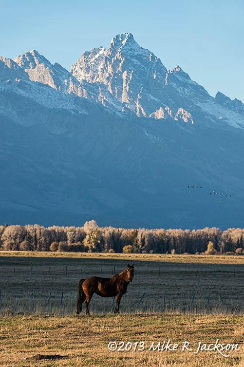 Web Tetons Horse Oct21