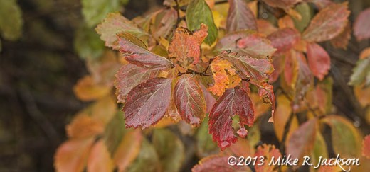 Wet Fall Leaves Oct13
