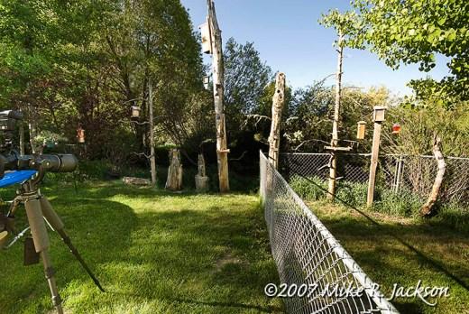 Back Yard 2007