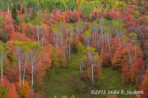 Mtn Maple Aspens Mosaic October 2