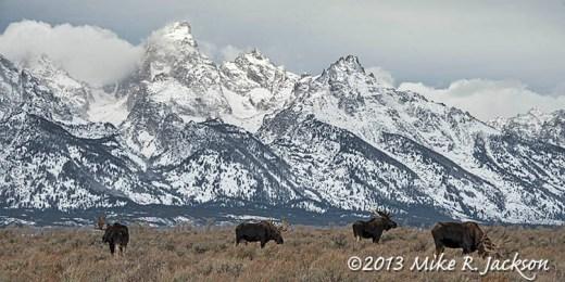 Web Four Moose Nov8