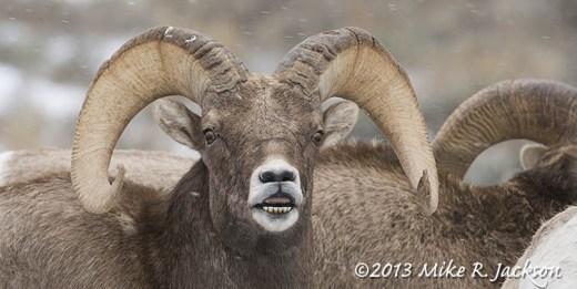 Web Ram Face Nov16
