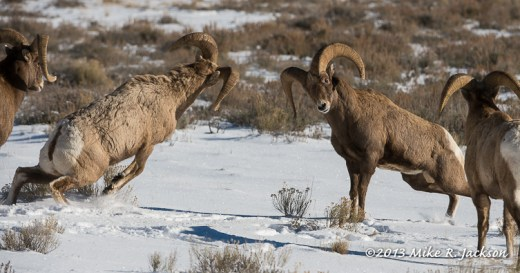 Web Bighorn Bash Dec25