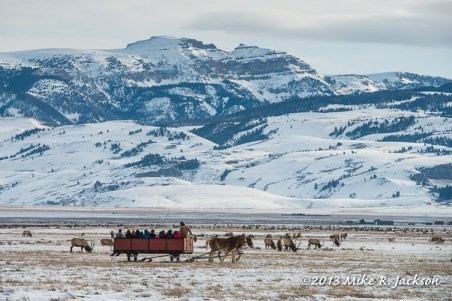 Web Elk Refuge Sleigh Ride Dec28