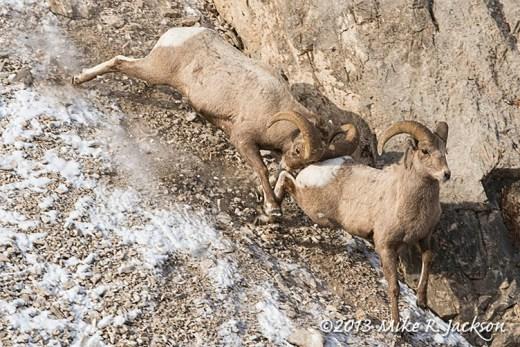 Web Rams Dec6
