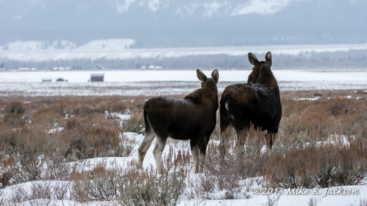 WebWatchful Moose Dec23