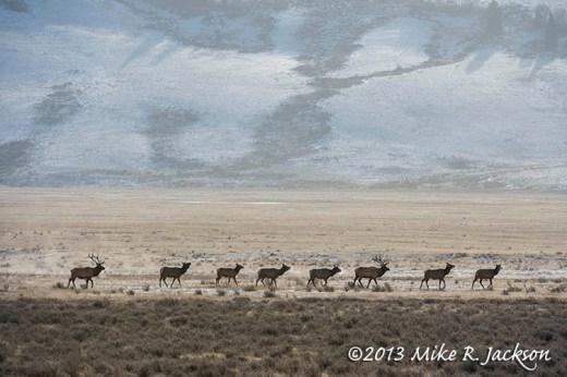 Elk Parade Dec5