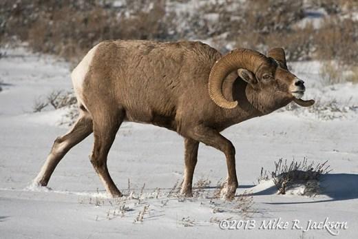 Ram Approach Dec24