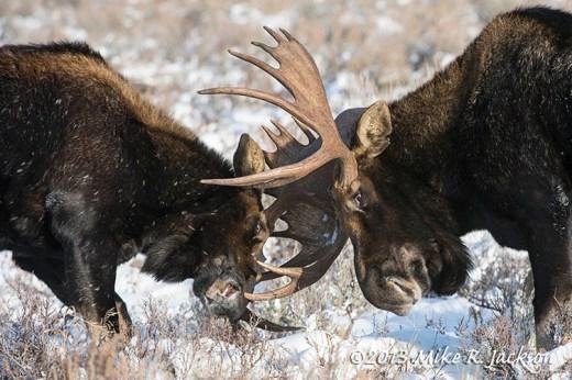 Sparring Bulls Dec4