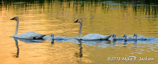Flat Creek Family