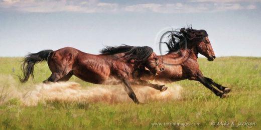 Prairie Warriors