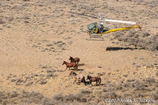 Web_Copter and Horses_2007