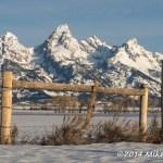 Web Mormon Fence Apr12