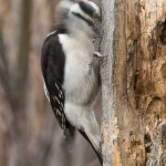 Web_WoodpeckerMotion_Jan22