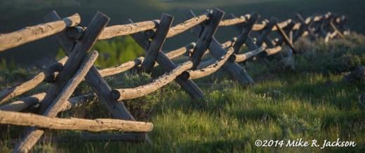 Web_Fence_June3