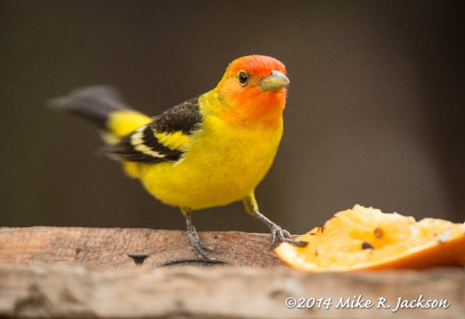 Web_FirstTanager_May5