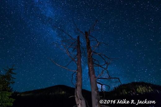 Web_MilkyWayTrees1_June28