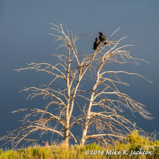 Web_Ravens_June19