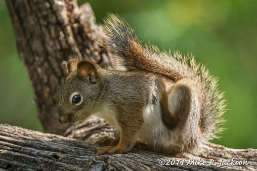 Web_SquirrelScratching_Jun11