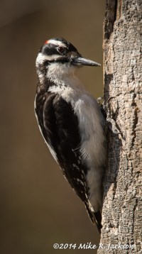 Web_Woodpecker_May14