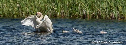 Stretching with the Cygnets - July 9