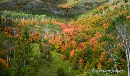 Corey's Mountain Maples