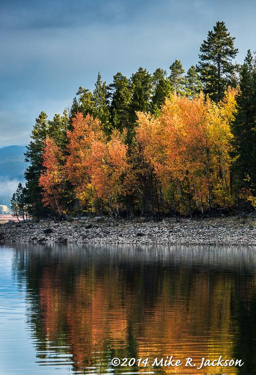 Jackson Lake Aspens