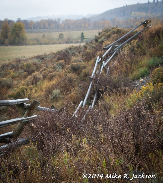 Rolling Buckrail Fences
