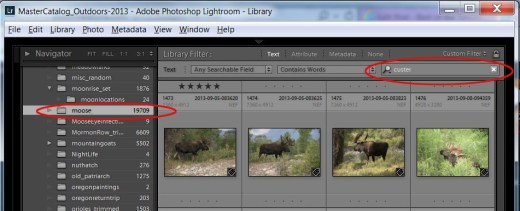 Custer Search in Lightroom