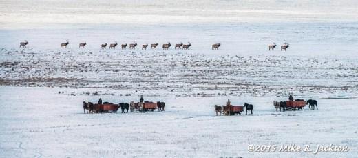 Elk Refuge Sleighs