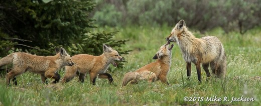 Fox Greetings
