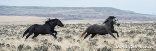 Wild Horse Chase