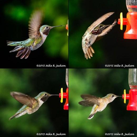 Hummingbird Test Shots