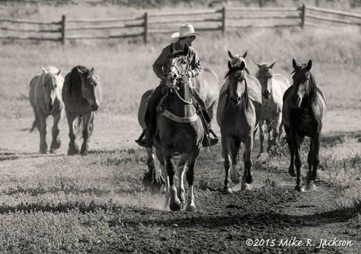 Wrangler and Horses