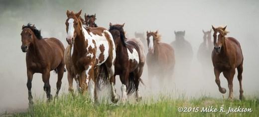 Dusty Horse Herd